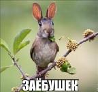 Omarovich аватар
