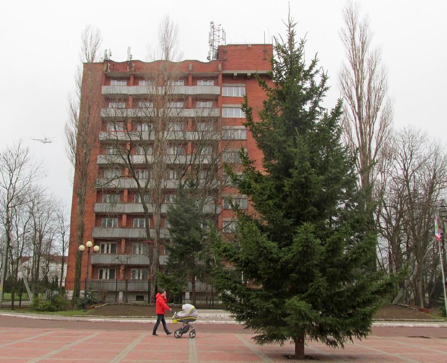 Новогодние ёлки в городах и домах-124428