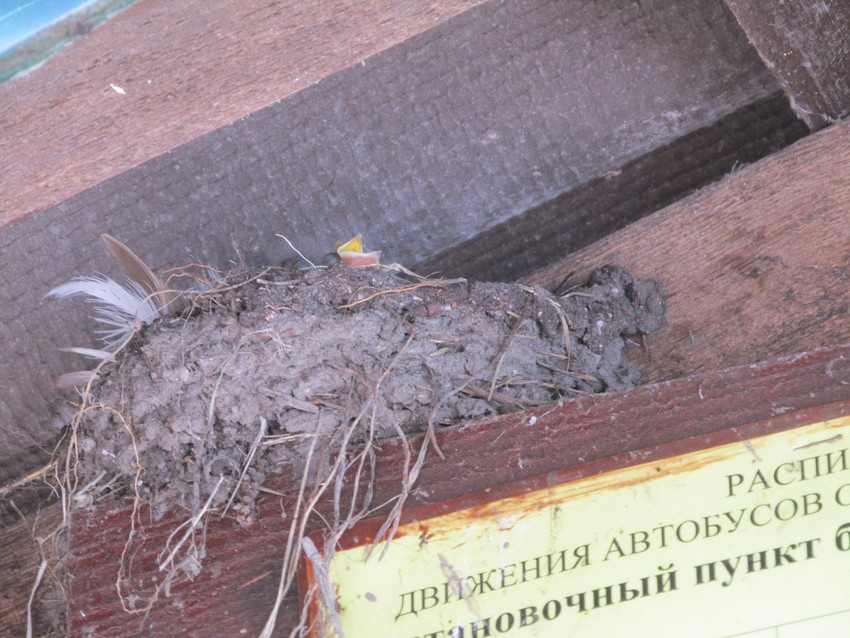 /var/www/admin/www/newzelenogradsk.ru/media/kunena/attachments/331/IMG_91901.jpg